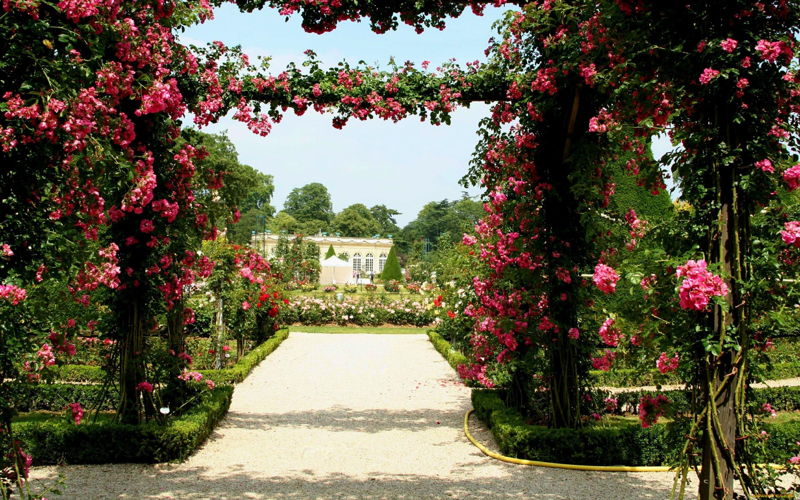 уверяют, что сад роз христа картинки способствовало то, что